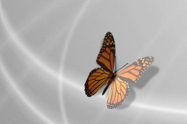 One Butterfly - Click to jump to Screenshots