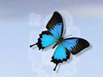 "Blue butterfly, with the ""Poof!"" effect when auto changing"